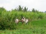 Sex Prihibited During Ashadha Farming Season Page1 Aid